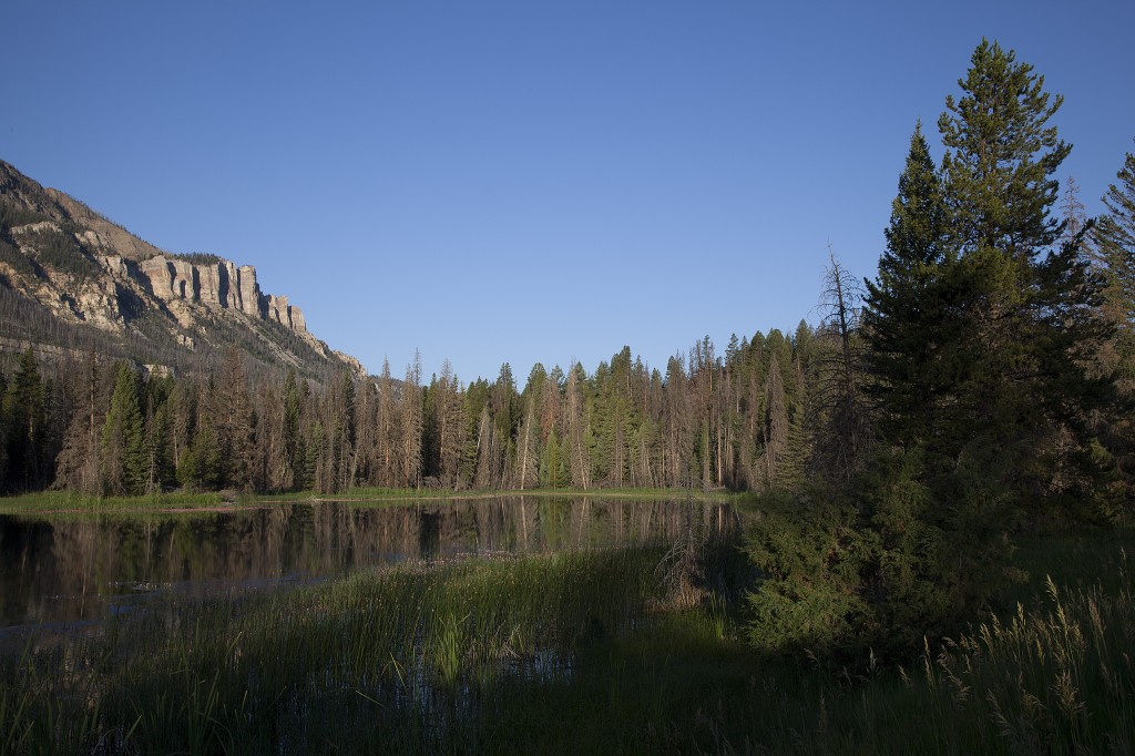 Wetlands under Cathedral Cliffs, Shoshone National Forest, Wyoming